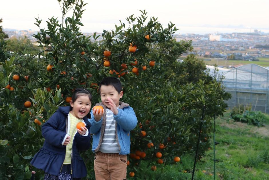 ブラッドオレンジの樹と子ども