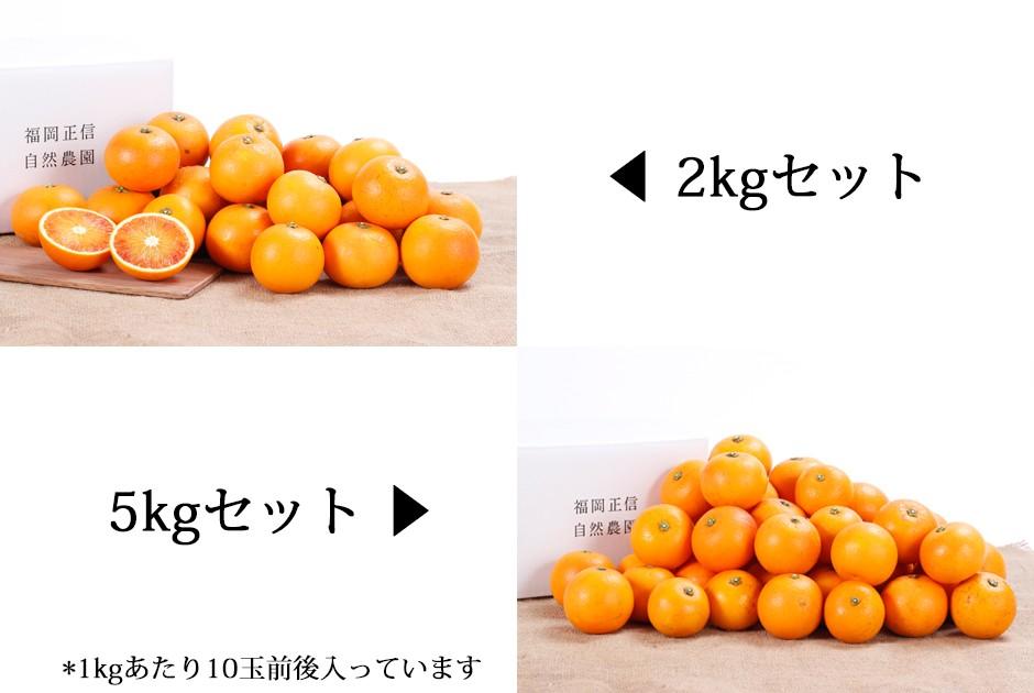 ブラッドオレンジ2kgと5kg